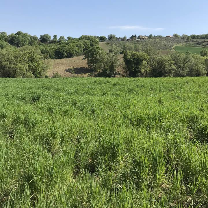 Farro - Agriturismo Sant'Angelo